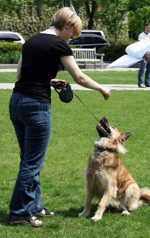 Three Dog Trainers